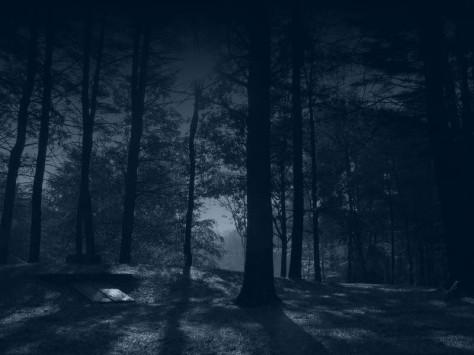 Dark Forest by Ha--Photobucket