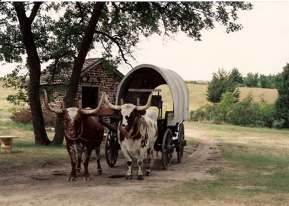 Ox-pulled wagon