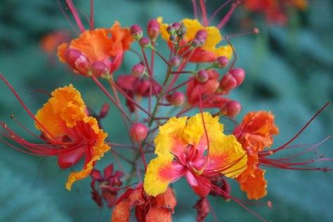 Desert Blooms by Andrew Schmidt